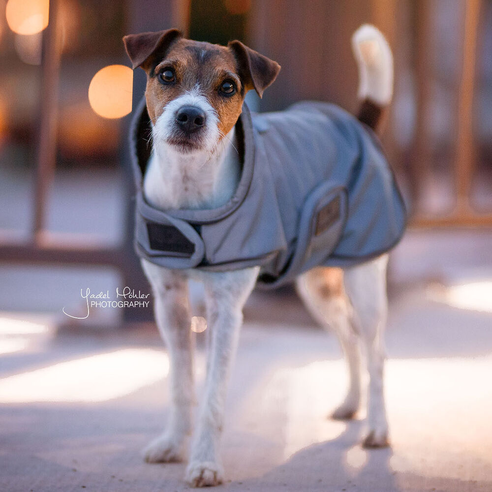 Kentucky Dog Coat Reflective & Water Repellent