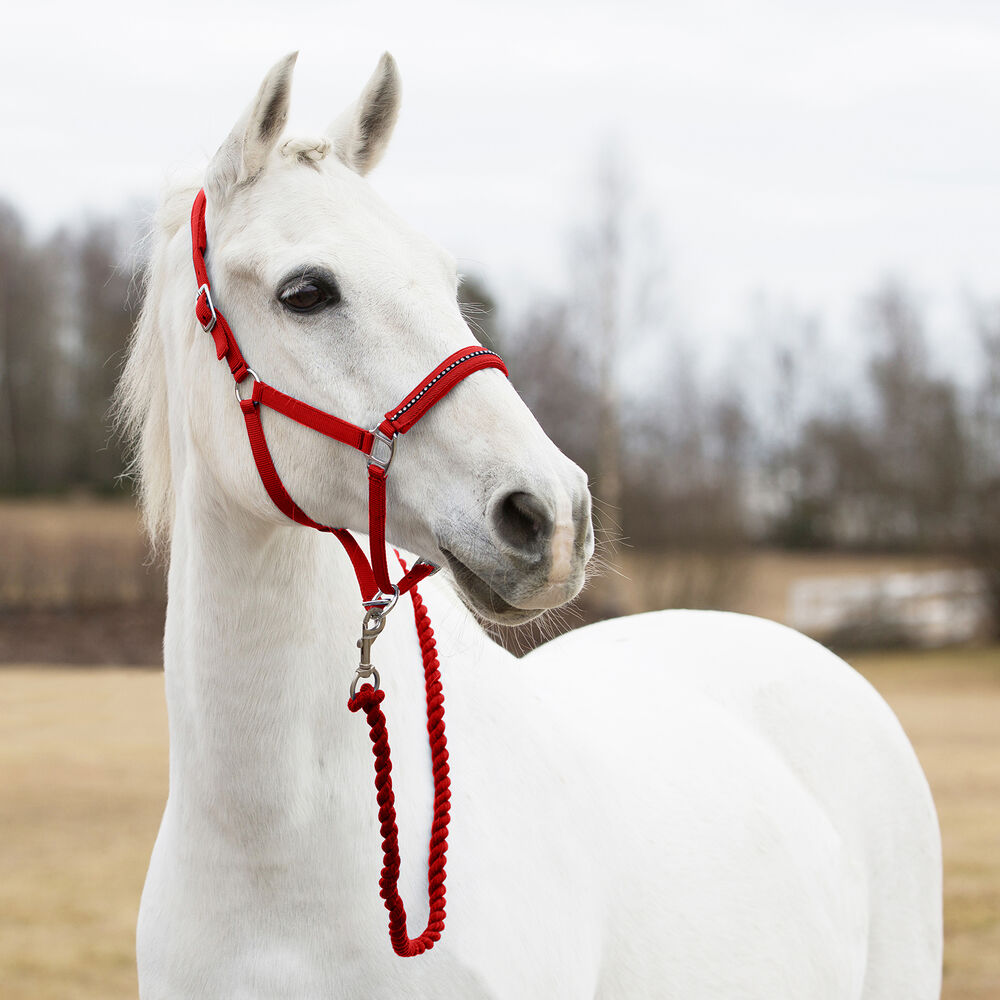 Image of Horze Pony riimu
