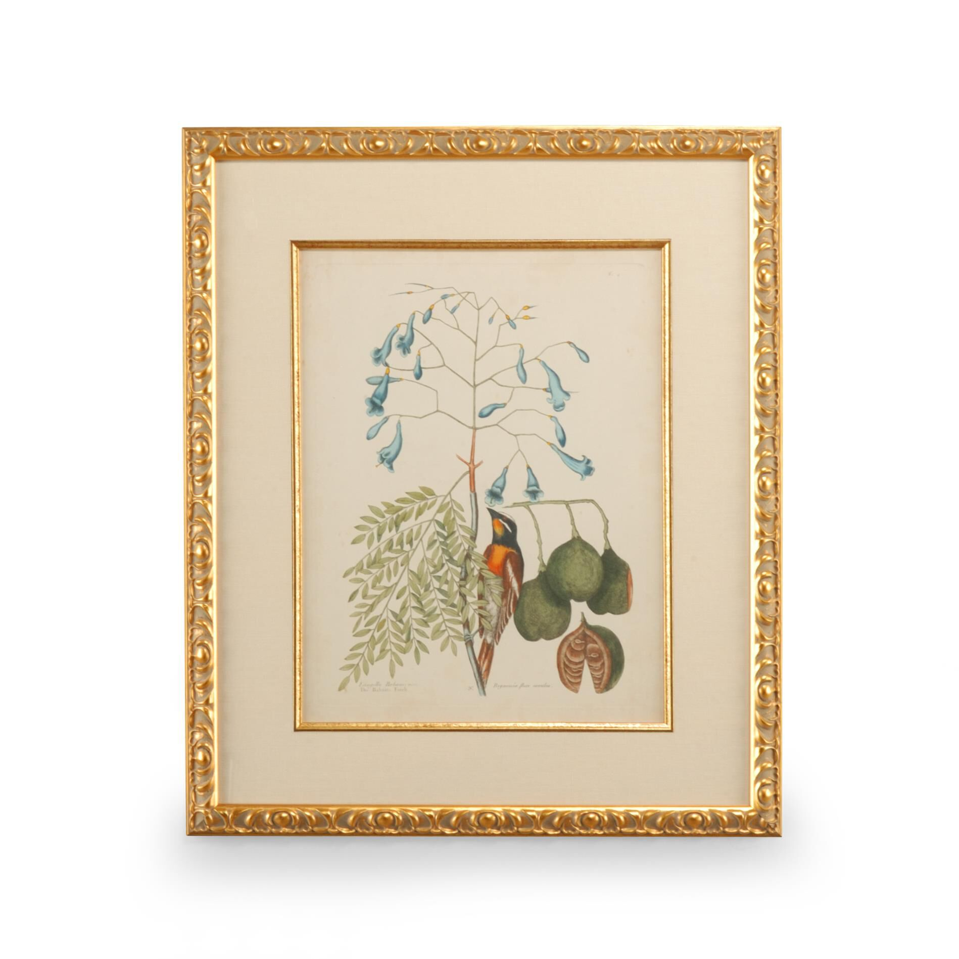 Chelsea House Catesby Bird Print Catesby Bird - 386176 - Traditional (1807555) photo