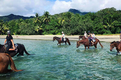 Cape Tribulation Beach Horse Riding